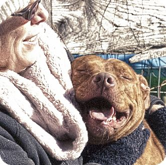 Pit Bull Terrier Mix Dog for adoption in Baltimore, Maryland - Karley