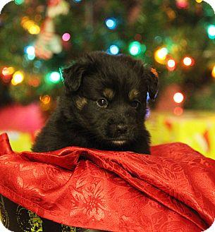 Labrador Retriever Mix Puppy for adoption in Waldorf, Maryland - Pixel