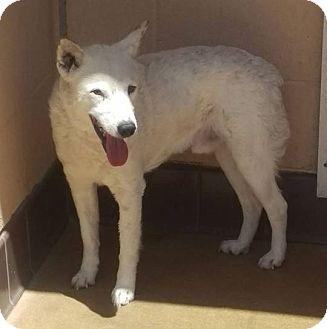 Australian Cattle Dog Mix Dog for adoption in Las Vegas, Nevada - Brodie