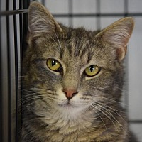 Adopt A Pet :: Pete - DFW Metroplex, TX