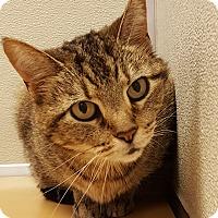 Adopt A Pet :: Sally Carrera - Grayslake, IL