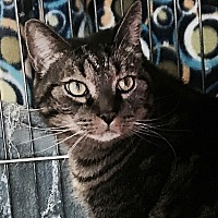 Adopt A Pet :: Jamie-Come in and visit me! - Manchester, NH