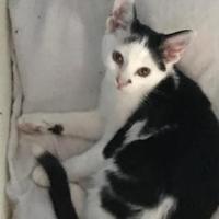 Adopt A Pet :: Jean Grey - Amarillo, TX