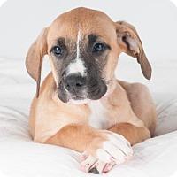Adopt A Pet :: Bobbie Jean - San Francisco, CA