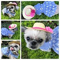 Adopt A Pet :: Gigi - Duluth, GA