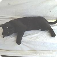 Adopt A Pet :: Sam - Calimesa, CA