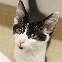 Adopt A Pet :: Carson - Naperville, IL