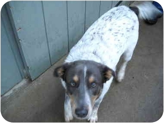 Cattle Dog Mix Dog for adoption in Tillamook, Oregon - Malcolm