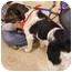 Photo 3 - Plott Hound/Springer Spaniel Mix Dog for adoption in Ferryville, Wisconsin - Luca