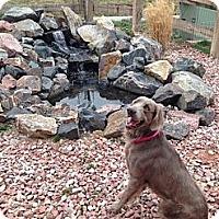 Adopt A Pet :: HAIRY POTTER - Albuquerque, NM