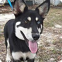 Adopt A Pet :: Sophie - Adamsville, TN