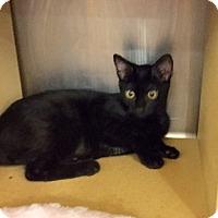 Adopt A Pet :: Tina - Colmar, PA