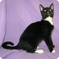 Adopt A Pet :: Dacey - Powell, OH