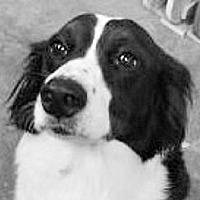 Adopt A Pet :: Tucker - Minerva, OH