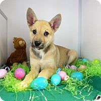 Adopt A Pet :: Brent - Manning, SC