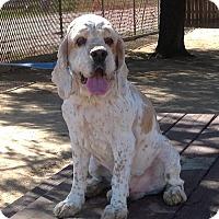 Adopt A Pet :: Herman - Toluca Lake, CA