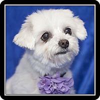 Adopt A Pet :: Jellybean - Covina, CA