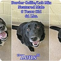 Adopt A Pet :: 2-1 Zeus - Triadelphia, WV