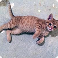 Adopt A Pet :: Rambo - Marion, NC
