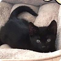 Adopt A Pet :: Ranger - Orange, CA