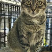 Adopt A Pet :: Ruby - Washington, IA