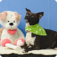 Adopt A Pet :: PEARL - Poteau, OK