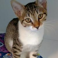 Adopt A Pet :: Blue Lagoon - Rio Rancho, NM