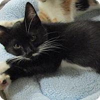 Adopt A Pet :: SISSY - Diamond Bar, CA