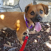 Spaniel (Unknown Type) Mix Dog for adoption in Los Angeles, California - DESI