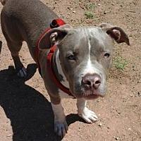 Adopt A Pet :: Shamoo - Phoenix, AZ