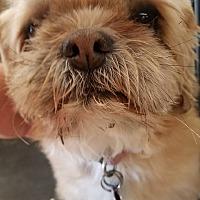 Adopt A Pet :: Cenna - Ogden, UT