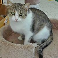Adopt A Pet :: Cyndi - Columbus, OH