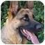 Photo 3 - German Shepherd Dog Dog for adoption in Los Angeles, California - Fina von Felsberg