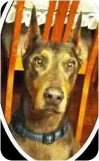 Doberman Pinscher Dog for adoption in spring valley, California - Ronin