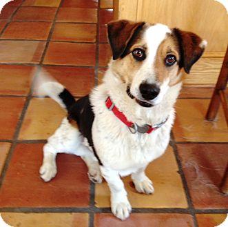 Basset Hound Mix Dog for adoption in Alpharetta, Georgia - Luke