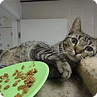 Adopt A Pet :: Petunia - MADISON, OH