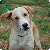 Adopt A Pet :: Gilbert - Derry, NH