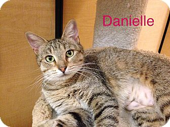 Domestic Shorthair Cat for adoption in Foothill Ranch, California - Danielle