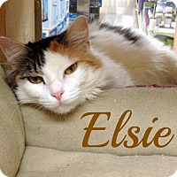 Adopt A Pet :: Elsie - Bentonville, AR