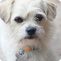 Adopt A Pet :: Mindy Lou - Norwalk, CT