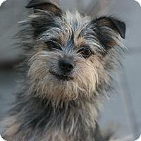 Adopt A Pet :: Donnie - Canoga Park, CA