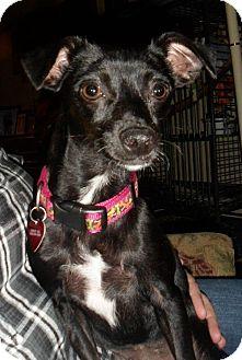 Terrier (Unknown Type, Small)/Dachshund Mix Dog for adoption in Tacoma, Washington - Della