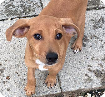 Mixed Breed (Medium) Mix Puppy for adoption in Waretown, New Jersey - DAN