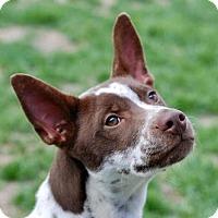 Adopt A Pet :: Jerico - Portola, CA