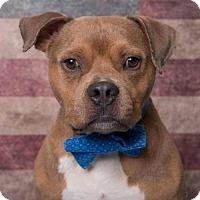 Adopt A Pet :: E.T. - Kenner, LA