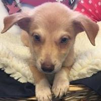 Adopt A Pet :: Ernest - Brownwood, TX