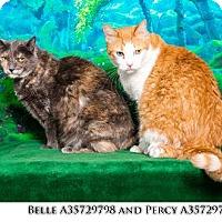 Adopt A Pet :: Belle - Reno, NV