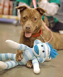 Pit Bull Terrier Mix Dog for adoption in Marietta, Georgia - Wendy