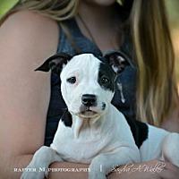 Adopt A Pet :: Marilyn - Phoenix, AZ