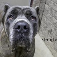 Adopt A Pet :: Memphis - South Bend, IN